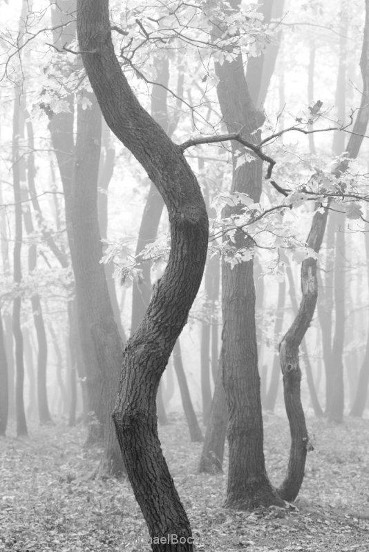 IMG_5d1_003139_autumn_2015