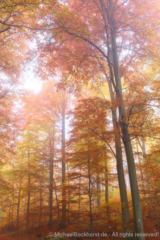 IMG_2260_autumn_2015_ii_5d2