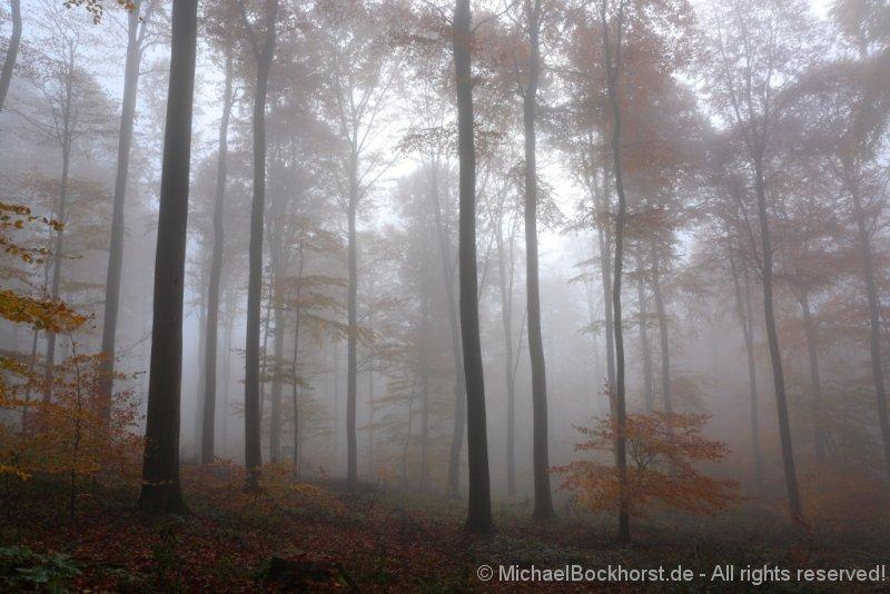 IMG_2309_autumn_2015_ii_5d2