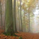 IMG_2247_autumn_2015_ii_5d2
