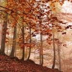 IMG_2289_autumn_2015_ii_5d2