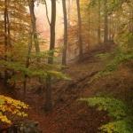 IMG_2294_autumn_2015_ii_5d2